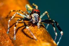 Springende spin Stock Afbeeldingen