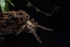 Springende Spinne lizenzfreie stockfotos