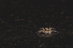 Springende Spinne auf dem Scheinwerfer Lizenzfreie Stockbilder