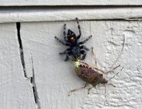 Springende Spinne und Gestank-Wanze auf Zaun Lizenzfreies Stockbild