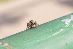 Springende spinzitting op groene pijp Stock Foto