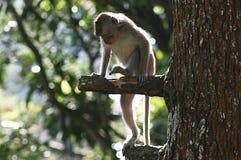 Springender Affe Lizenzfreie Stockfotos