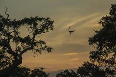 Springender Affe Stockfotografie