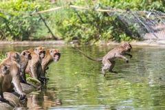 Springender Affe direkt oben Lizenzfreie Stockbilder