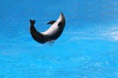 Springender Delphin. Stockbilder