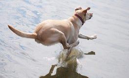 Springender Hund Lizenzfreie Stockfotos