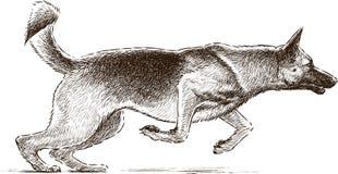 Springender Hund Stockbilder