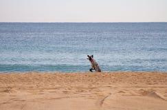 Springender Hund Stockfoto