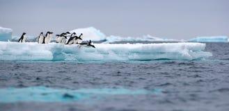 Springender Pinguin Ein Adelie u. ein x28; Adélie& x29; Pinguin taucht in Meer von einem Eisberg lizenzfreie stockfotografie
