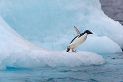 Springender Pinguin Ein Adelie u. ein x28; Adélie& x29; Pinguin taucht in Meer von einem Eisberg stockfoto