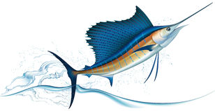 Springender Segelfisch Stockfotos