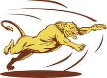 Springendes Angreifen der Löwin Stockfotos