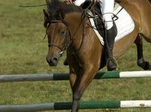 Springendes Pferd Lizenzfreies Stockbild
