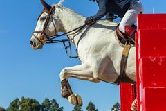 Springendes Pferd Rider Closeup Action Stockfoto