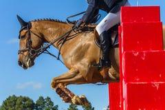 Springendes Pferd Rider Closeup Action Stockbilder