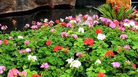 Springer z podlewaniem kwitnie w ogródzie zbiory