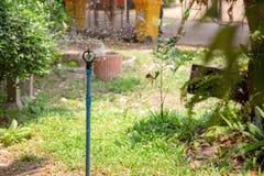 Springeren bevattnar växterna arkivfoton