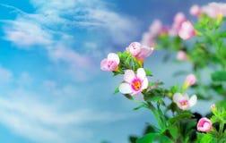 springflower 免版税库存照片