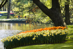 springflowers пруда парка расположения Стоковое Изображение