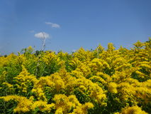 Springflowers Image libre de droits