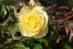 SpringFlowers06 Fotografia Royalty Free
