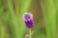SpringFlowers07 Fotografia Stock