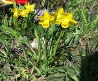 Springflowers stockbilder