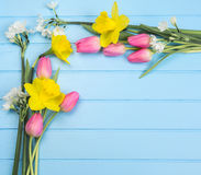 Springflowers on blue wood background royalty free stock photo