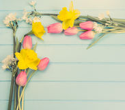Springflowers on blue wood background stock photos