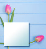 Springflowers on blue wood background. And paper copy space royalty free stock photos