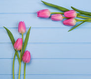 Springflowers on blue wood background. And splash royalty free stock images