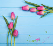 Springflowers on blue wood background. And splash royalty free stock photography