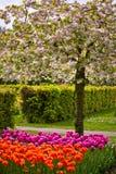Springflowers coloridos no jardim Keukenhof Fotos de Stock Royalty Free