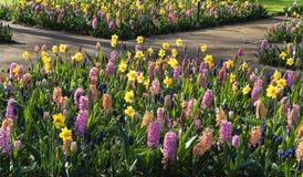 Springflowers on crossroad Royalty Free Stock Photos