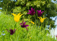 Springflowers an einer Wiese Lizenzfreie Stockfotografie