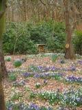 Springflowers i det mest forrest Royaltyfri Fotografi