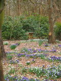 Springflowers im forrest Lizenzfreie Stockfotografie