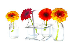 Springflowers in vases Stock Image