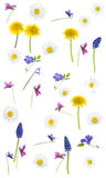 Springflowers on white background. Colorful springflowers on white background stock photos