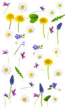 Springflowers on white background. Colorful springflowers on white background stock image