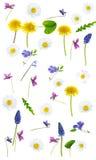 Springflowers on white background Stock Image
