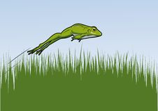 Springfrosch. Green frog jumps over grass Stock Images