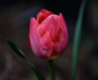 Springing Royalty Free Stock Photos