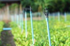 Springlersysteem in landbouwbedrijf Stock Fotografie