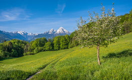 Springlike alpine mountain landscape with flowers and blooming fruit trees Royalty Free Stock Photo