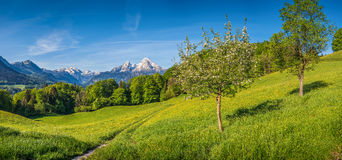 Springlike alpine mountain landscape with flowers and blooming fruit trees. Panoramic view of idyllic mountain landscape in the Alps with hiking trail on fresh royalty free stock photo