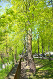 A springlike park in Aschaffenburg, Germany Stock Photography