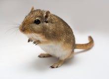 Springmuis die met shalow dof is ontsproten Royalty-vrije Stock Foto's