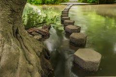 Springplanken Boxhill, Surrey, Engeland g Royalty-vrije Stock Foto