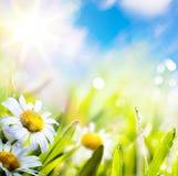 在草的艺术抽象背景springr花在星期日天空 免版税库存照片